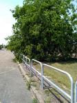 Elagage des arbres à Montceau
