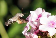 Suite de « Le printemps des animaux » (Nature)