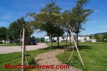 Traitement et protection des arbres