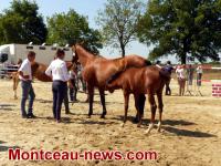 Blanzy Concours de chevaux de sport