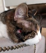 Maltraitance de chat à Saint-Vallier