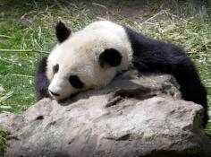 Sortie au ZooParc de Beauval avec l'OMVAC
