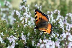 """""""Le printemps des animaux"""" (Nature)"""