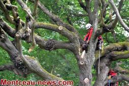 Faits divers - Branches d'arbres menaçant de tomber à Blanzy