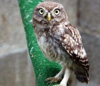 Ornithologie(Bis)