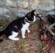 Chaton trouvé à Blanzy