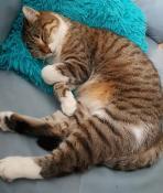 Chat « perdu » à Montceau