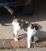 Chat trouvé à Perrecy-les-Forges
