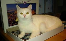 Chat perdu à Saint-Vallier