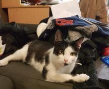 Chat trouvé à Blanzy