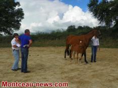 Blanzy : Association d'éleveurs locaux et régionaux