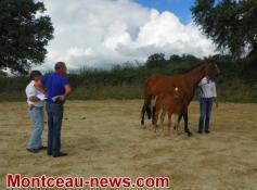 Concours de chevaux ( Blanzy)