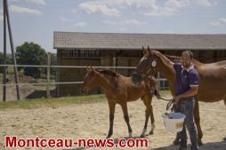 Concours de foals (Blanzy)