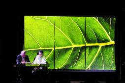 «Un arbre tout neuf » (CCM)