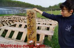 Rencontre de Guilaine et Antony Bascop, éleveurs et producteurs d'escargots de Bourgogne