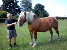 Des nouvelles de « Galan » Le cheval des Mazilles