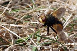 Regard sur une mouche...