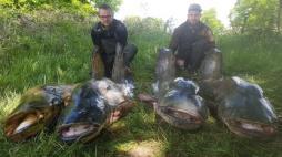 Pêche : Thomas et Damien ont sorti 4 silures du Lac de la Sorme