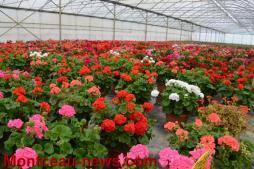Le jardinier de Pouilloux – Ets Daniel Thevenoux