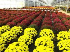 Les Floralies d'automne avec le Jardinier de Pouilloux