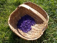 C'est le printemps : Découvrez les plantes sauvages du pays !
