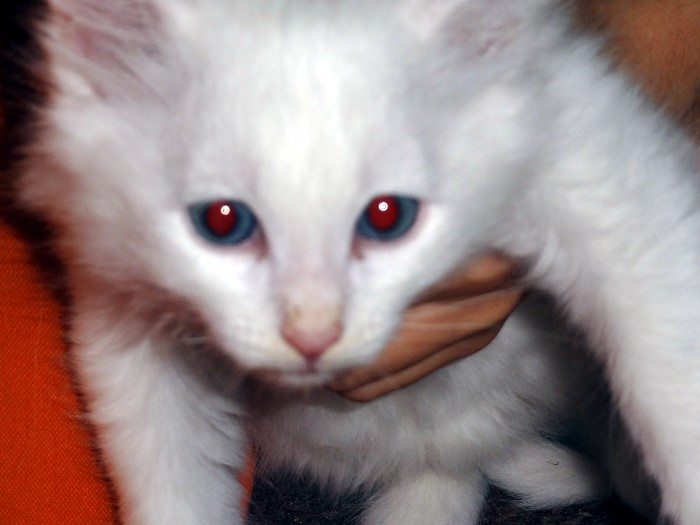 minier chat sites Osez l'insolite et entrez dans l'univers des plus grandes mines de fer de savoie  a 900m d'altitude, au cœur du massif des hurtières,.