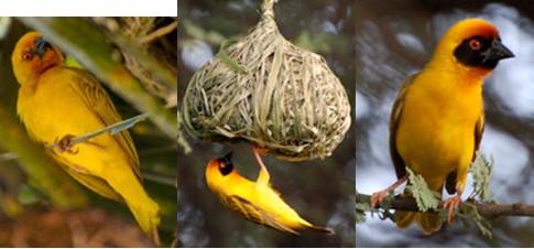 afrique oiseaux 0805132