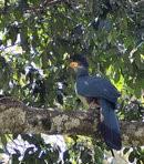 afrique oiseaux 0805134