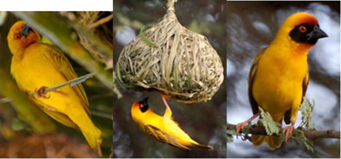 afrique oiseaux 12051312