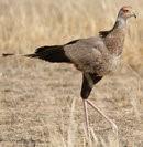afrique oiseaux 1205135