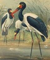 afrique oiseaux 1205138