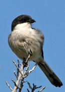 afrique oiseaux 1205139