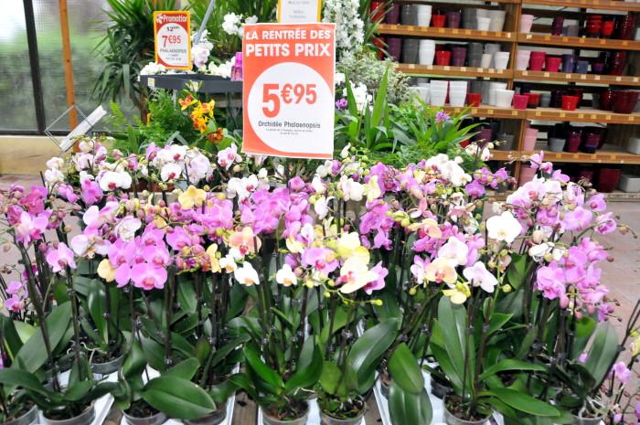Substrat orchidée jardiland