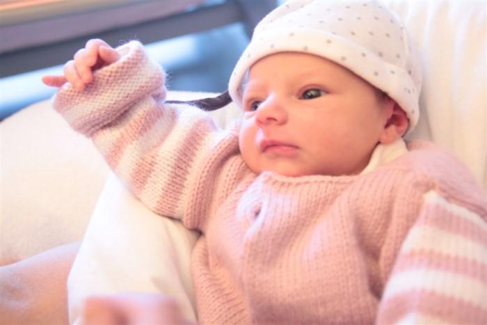 bebe shana 2404143