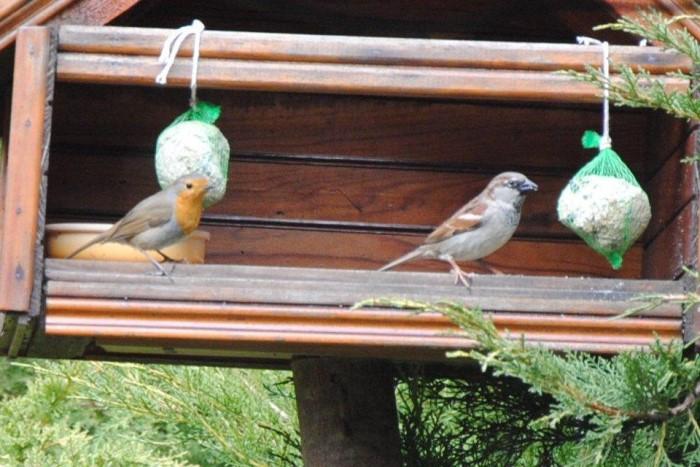 oiseaux 1102156