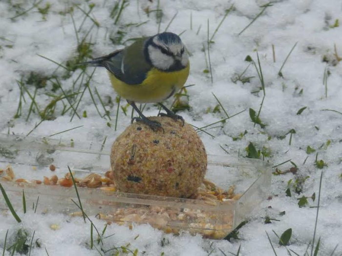 oiseaux hivert 02021510