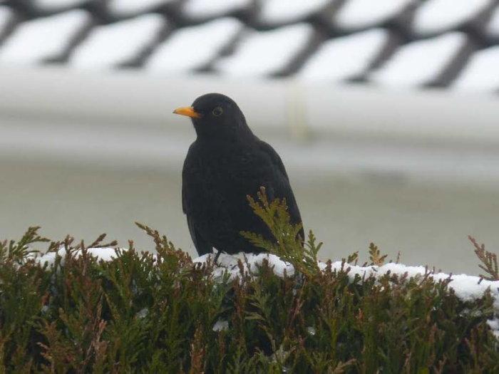 oiseaux hivert 02021512