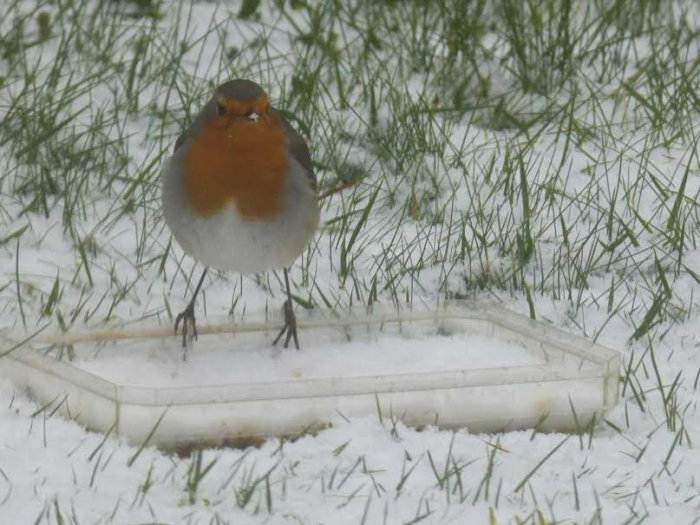 oiseaux hivert 0202152