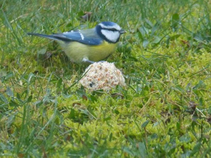 oiseaux hivert 0202153