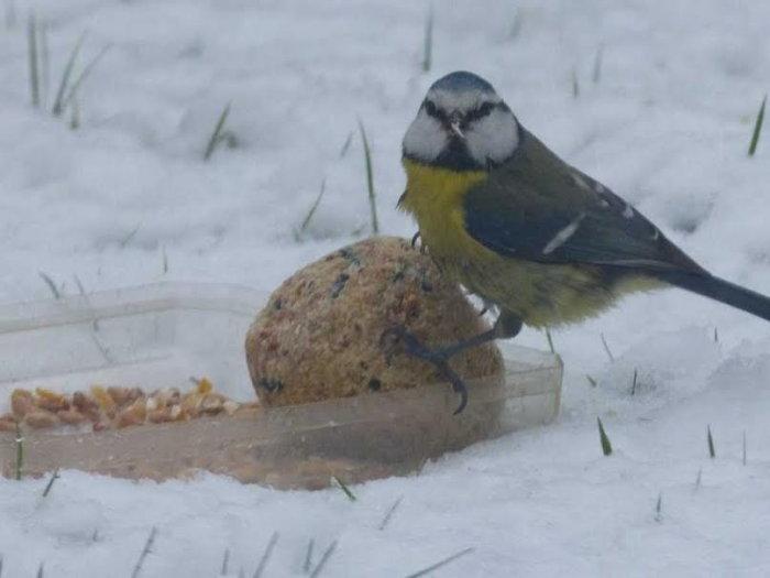 oiseaux hivert 0202154