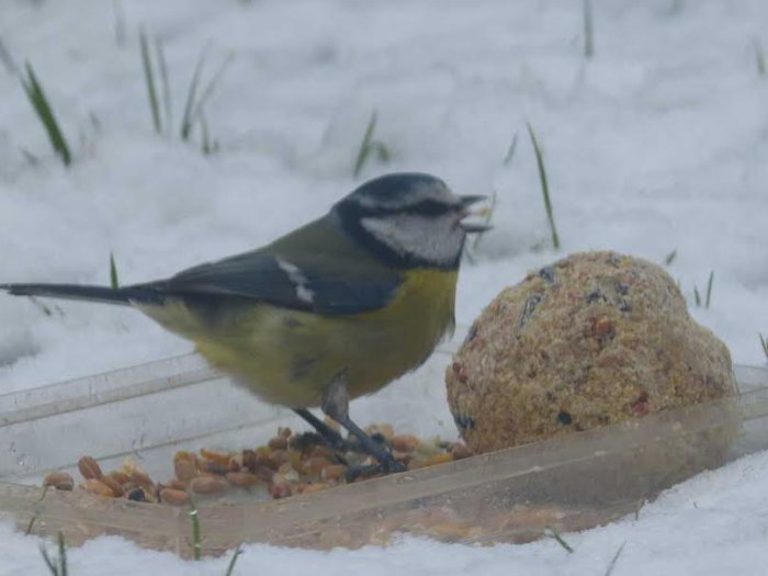 oiseaux hivert 0202155