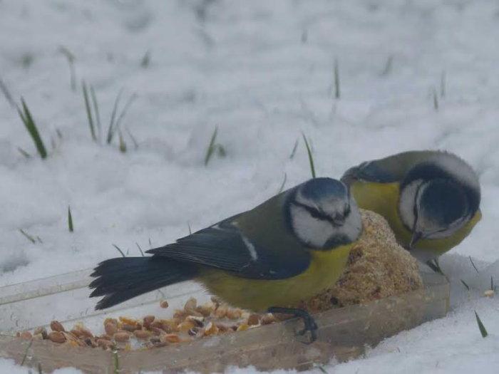 oiseaux hivert 0202157