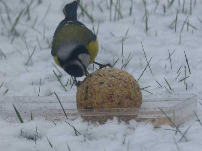 oiseaux hivert 0202158