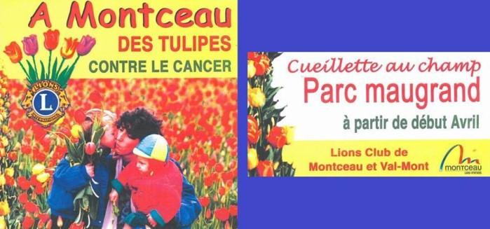 aff lions tulipes 1604152