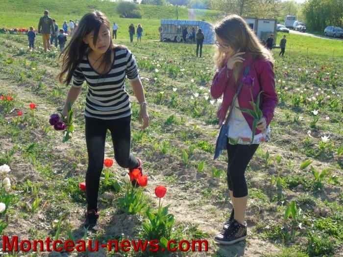 st ex tulipe 24041512