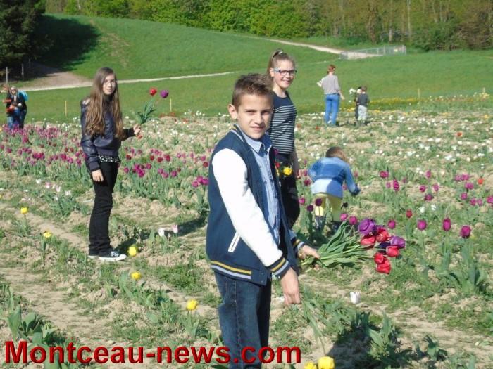 st ex tulipe 2404152