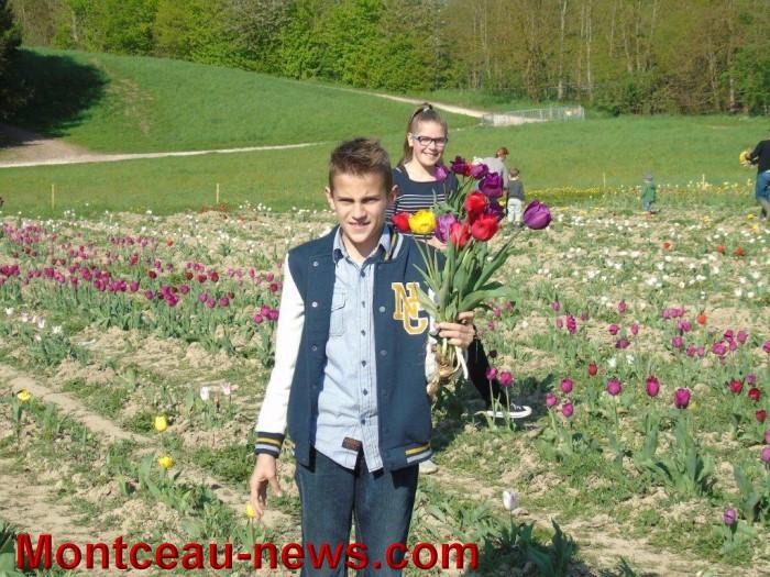st ex tulipe 2404153