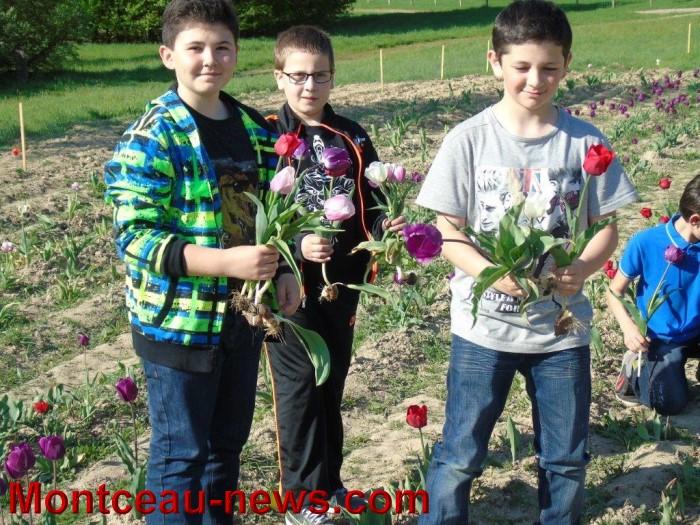 st ex tulipe 2404155