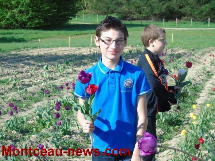 st ex tulipe 2404156
