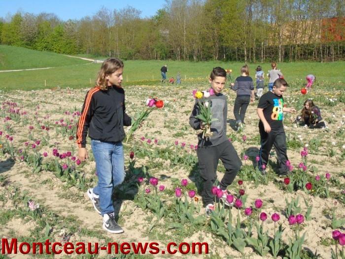 st ex tulipe 2404157